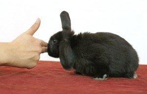 SATS konijn